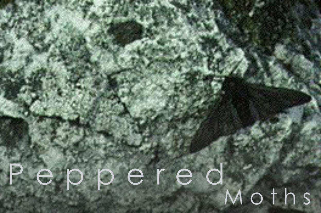 Peppered Moths Richard William Nelson