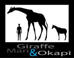 Giraffe + Okapi + Man