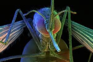 Malaria 3 (1)